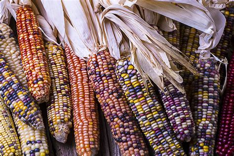 With Heirloom Seeds, Cherokee Nurture Cultural History and