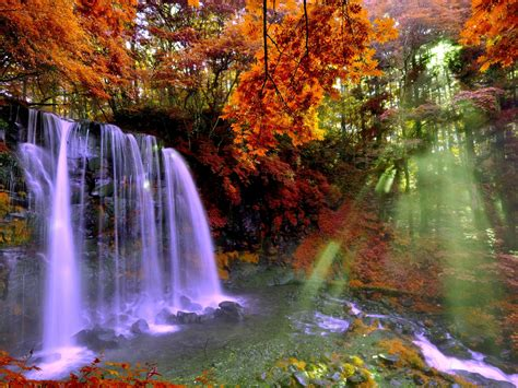 Autumn Forest Falls 2560x1600 0876 : Wallpapers13